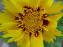 Verdant Blooms