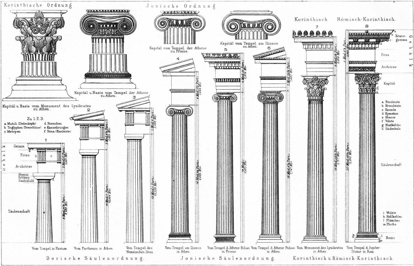 Technical Drawing Corinthian Column on roman colosseum dimensions