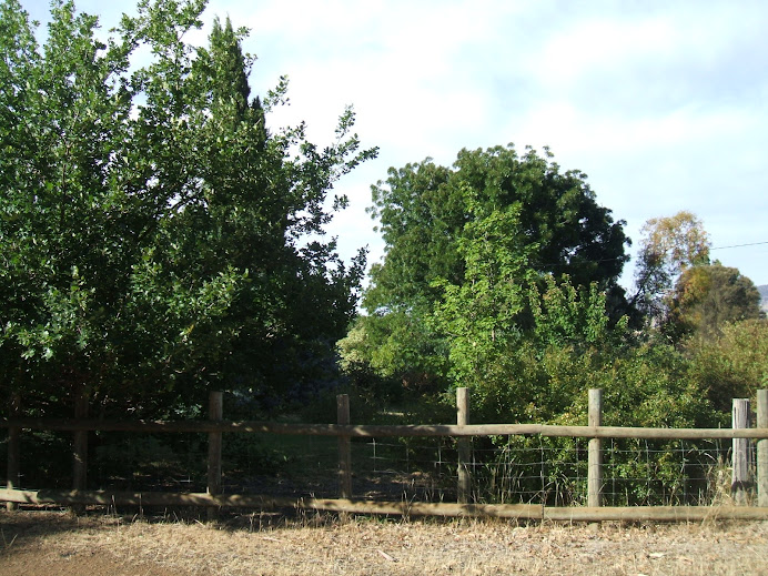 Dry Tasmanian Garden