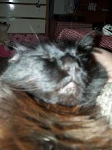 ~Kittie~