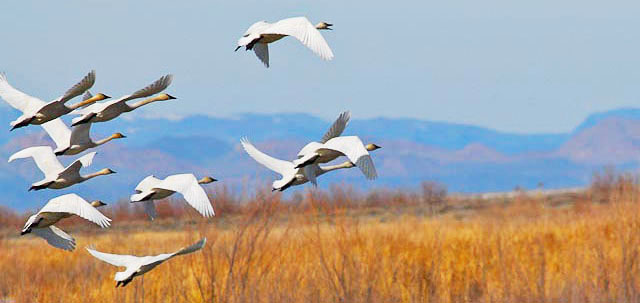 Friends of Stillwater NWR