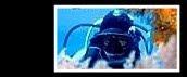 O Nosso Blog de Mergulho na Ilha Terceira