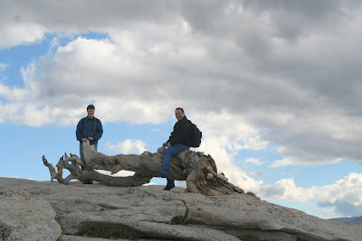 Jeffrey Pine on Sentinel Dome in Yosemite