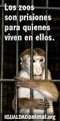 No vayas al Zoo