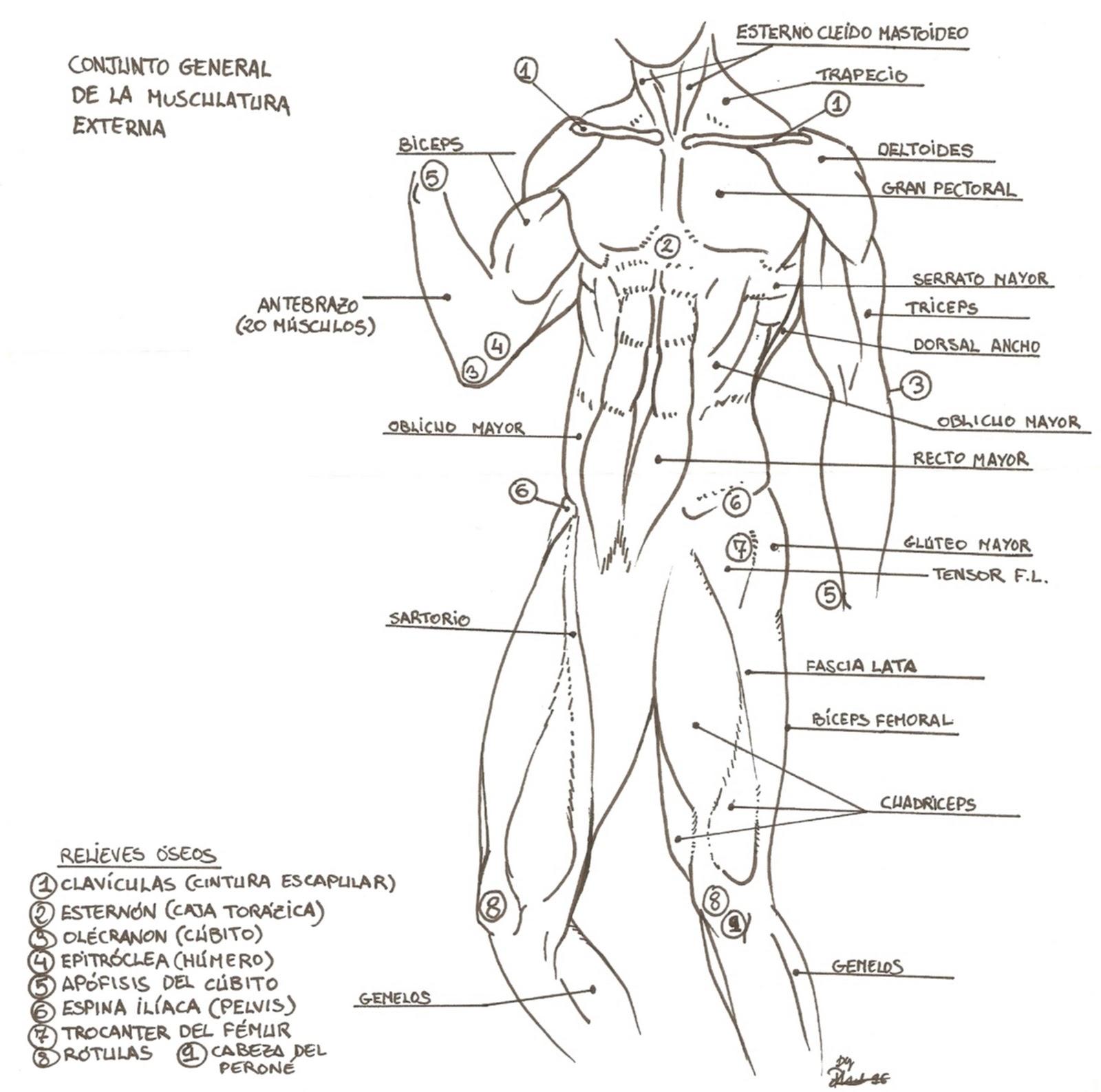 PASA UN RATO CON PETREL: Algo de anatomía