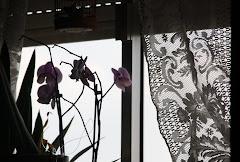 As minhas Orquideas