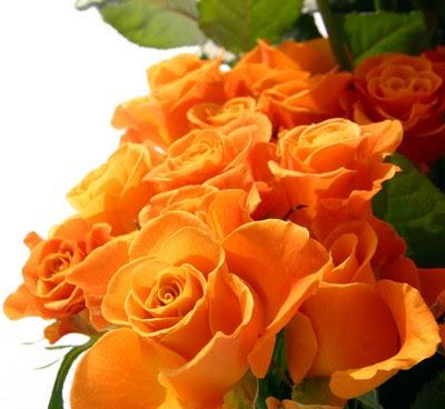 http://1.bp.blogspot.com/_s9QpV5pdCtQ/SoMXueMe4aI/AAAAAAAAAig/kVWiVJKxniI/s400/orange-rose.jpg
