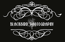 Blackbird Photography Blog