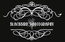 Blackbird Photography Blog