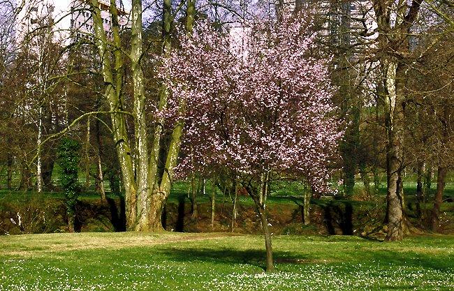 árbol florecido en gorostiza