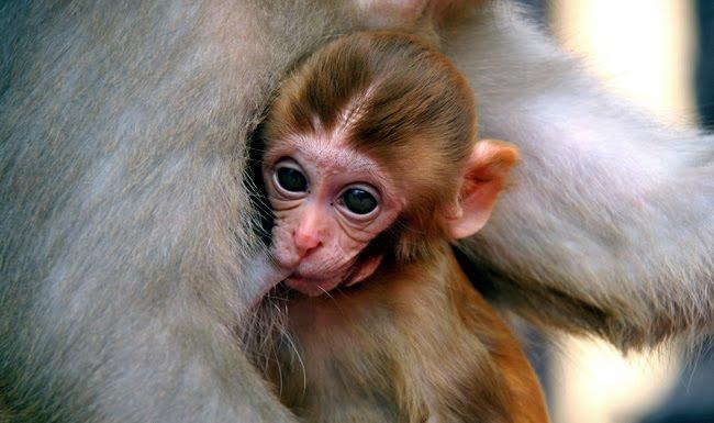 el templo de los monos · nepal [haz click sobre la imagen para ver el album completo]