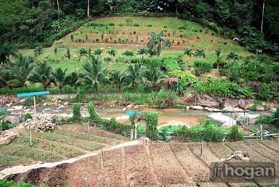 Kampung Bukit Tinggi Picture