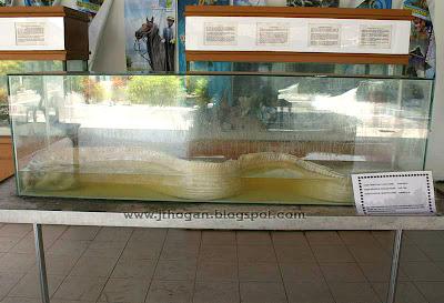 Oar Fish Photo Malaysia