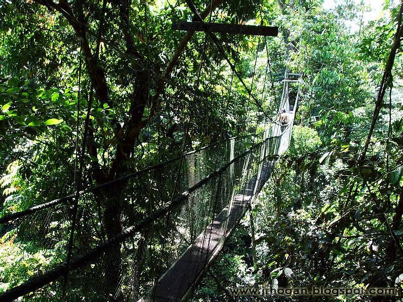 Mulu Sarawak Treetop Walk