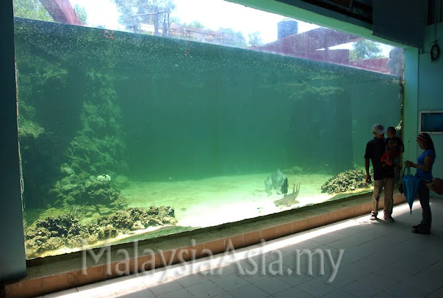 The Green Connection in Kota Kinabalu Sabah - Malaysia Asia