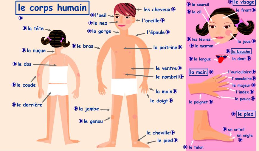 vocabulaire le corps