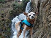 O Cachorro Viajante