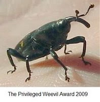 Winner of The Privileged Weevil Award 2009