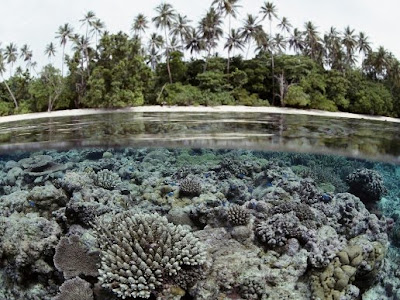 nature_photography_wallpaper_coral_reef_trees_photography