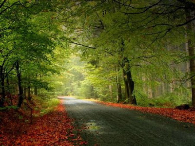 roadway photography, nature photography, trees photography, trees, tree, beauty photography, wonderful photography,
