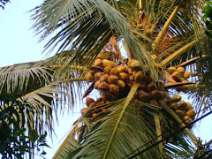 Kerala-Land of coconuts