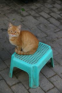淡水路の野菜屋店頭の子猫