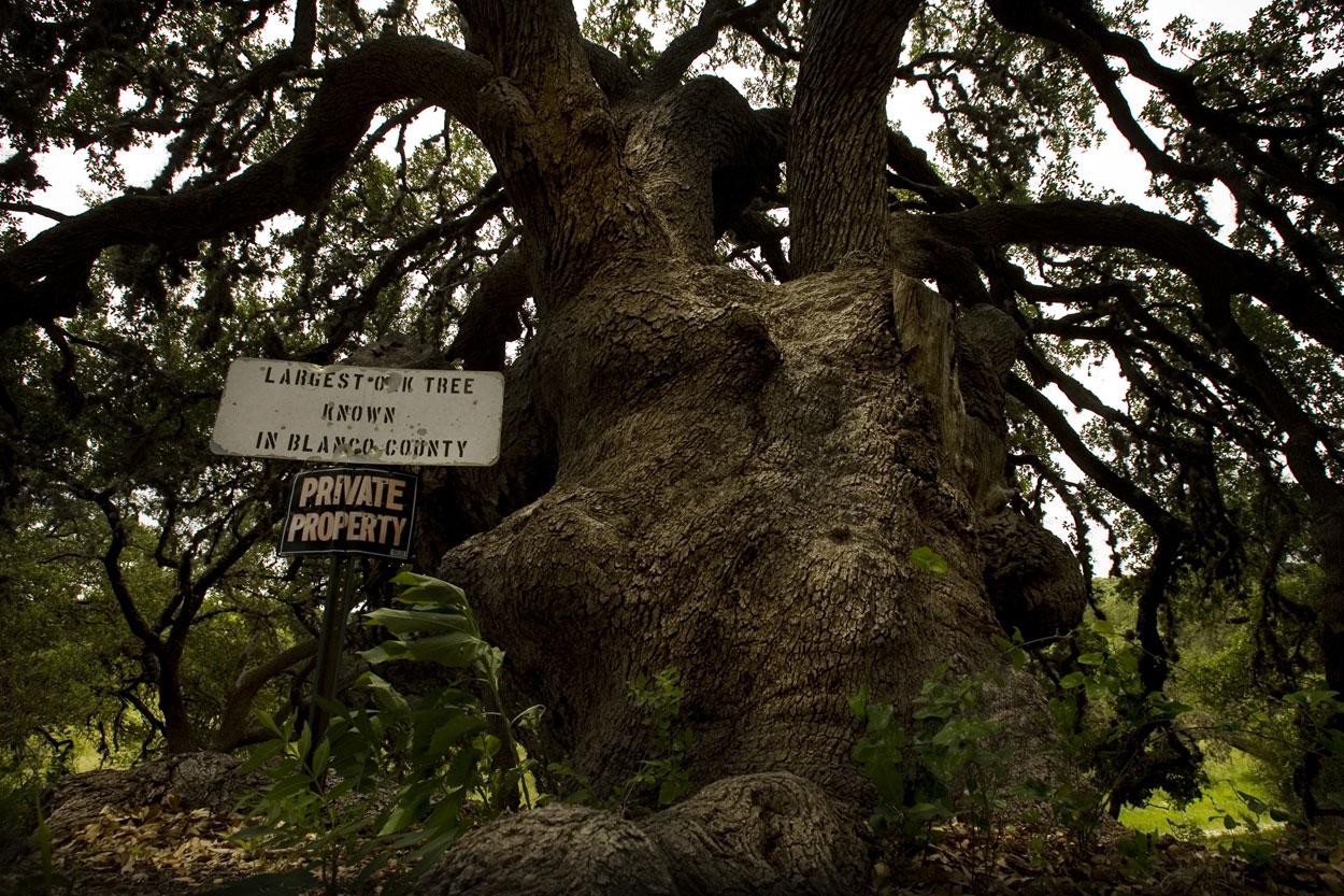 http://1.bp.blogspot.com/_sEF6qcRjluA/TTYKtKk2DmI/AAAAAAAAADM/Z5I8LrQ8s2o/s1600/jwj-oak-tree-419.jpg