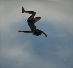 szandra repül