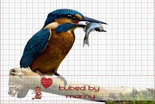 http://marnysensation.blogspot.com/2009/08/dowload-tube-kingfisher-800-png-format.html