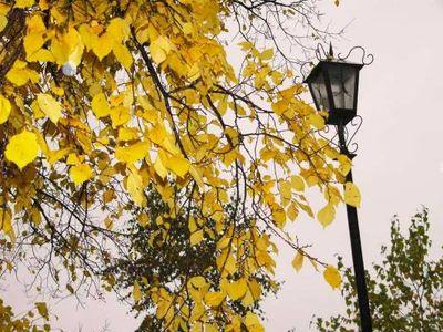Осень Камышлов