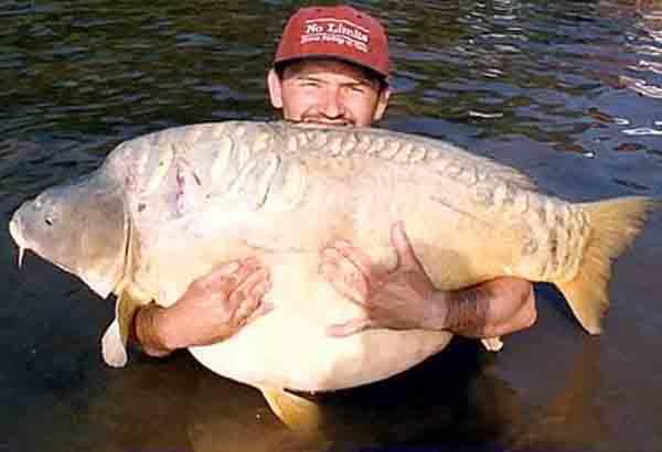 Illinois River Fisch asiatischen Karpfen