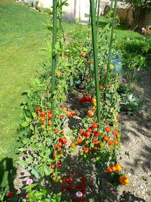 Notre jardin secret ao t 2009 - Traitement olivier bouillie bordelaise ...