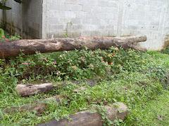 Troncos abandonados pelo proprietario do terreno