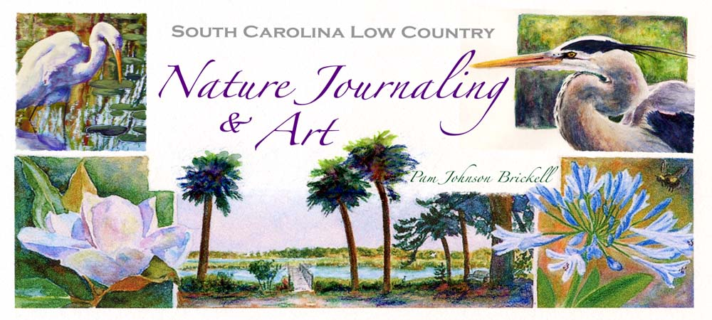 South Carolina Low Country Nature  Journaling and Art