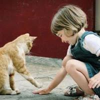 Gambar_kucing_ramah