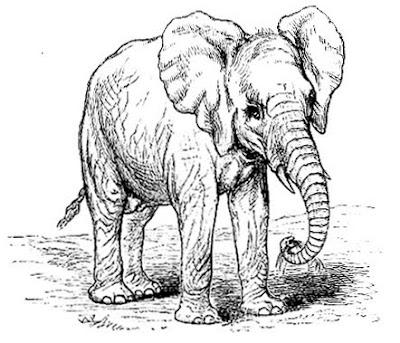 gambar_gajah_afrika