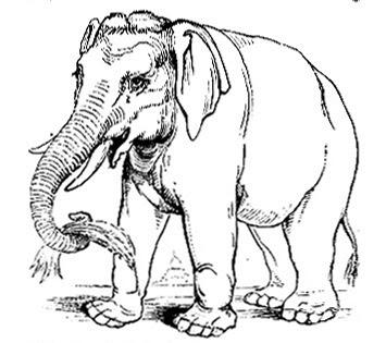 gambar_gajah_makan