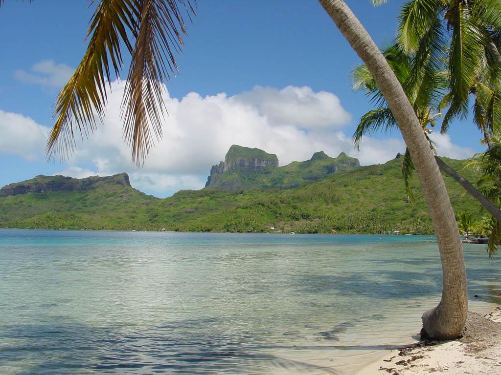 Gambar Pantai Keren dengan Pohon Kelapa