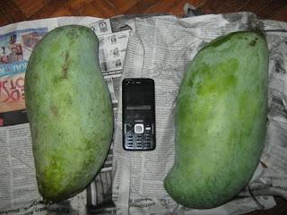 buah_Mangga_murah