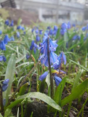 flowers, rain,
