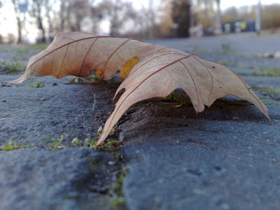 autumn, cobbles, leaf, spider-like