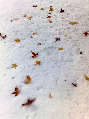 leaves, snow