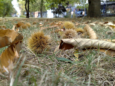 autumn, chestnuts, fallen leaves