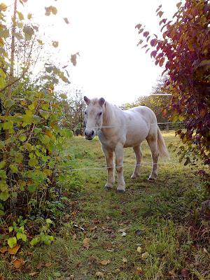 horse, hedge