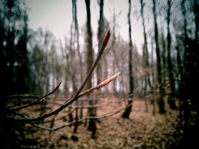 woods, tree,