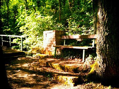 bench, woods