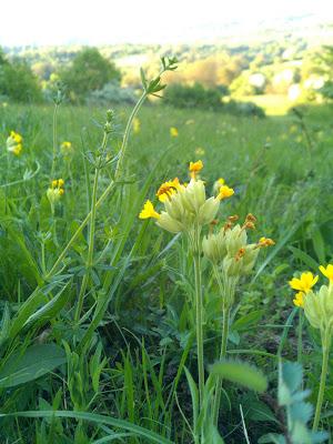 flowers, grass,