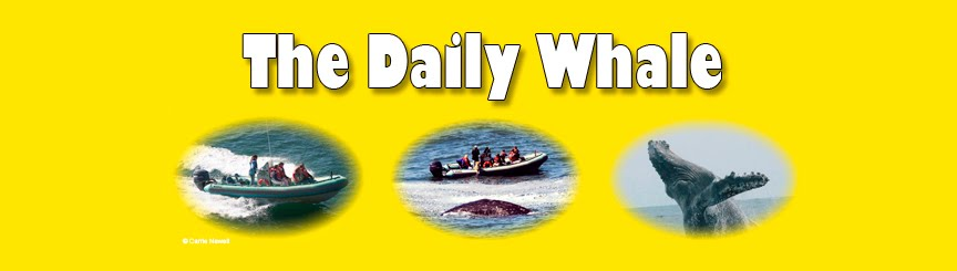 The Daily Whale