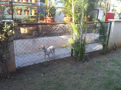 Pune India pet dog