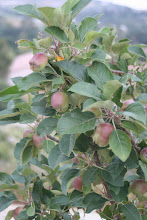 What's Growing in the Orchard